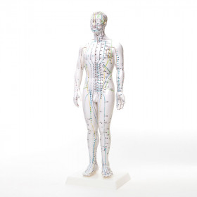 Akupunktur Ganzkörpermodell